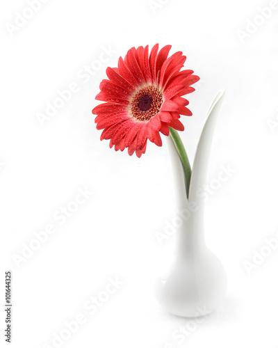 Gerbera Blume Rot Porzellan Vase Dekoration Buy This Stock