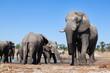 Elephant in the bushveld