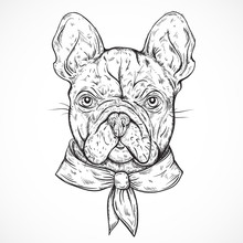 French Bulldog. Vintage Black And White Hand Drawn Vector Illustration In Sketch Style
