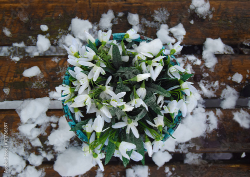 Vase with snowdrops on the wood bench