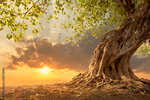Fotobehang Bomen Beautiful tree at sunset vibrant orange with free copy space.