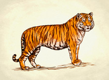 Engrave Ink Draw Tiger Illustr...