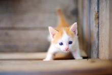 Little Kitten Walking On The Street