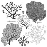 Set of cartoon underwater plants. Vector isolated elements.