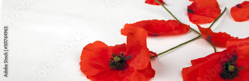 Poppy Poppies - for Remembrance Day - Isolated on White - Panorama background texture.