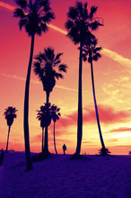 Venice Beach Sunset Vintage Retro Cross Processed Colors. Tropical Summer Vacation And Travel Concept