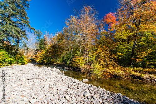 Fotografia, Obraz  Fall colors on a remote stream in the Catskills