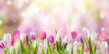 Fototapeta Tulipany - Spring meadow