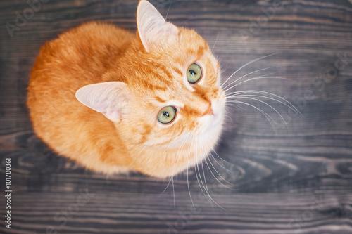 Fényképezés  Cat sitting on the wooden floor