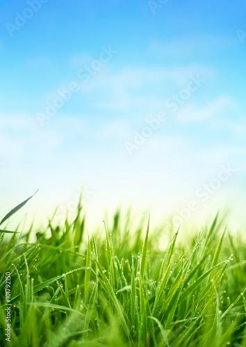 Deurstickers Gras Fresh Spring Grass. Garden Background