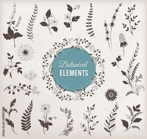 Foto  Set of Botanical Vector Elements