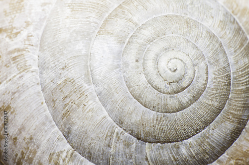 Macro of a snail shell