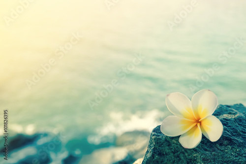 Spoed Foto op Canvas Frangipani White frangipani on the rock at the beach