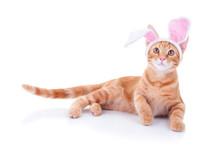 Easter Bunny Pet Cat In Bunny Ears