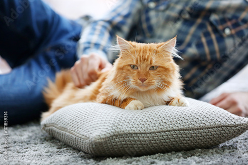 Spoed Foto op Canvas Canada Man holding a fluffy red cat on a carpet