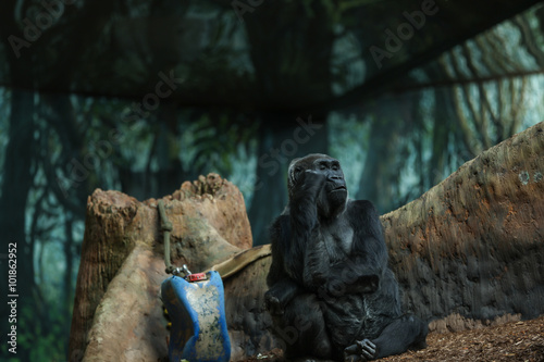 Cuadros en Lienzo Western lowland gorilla