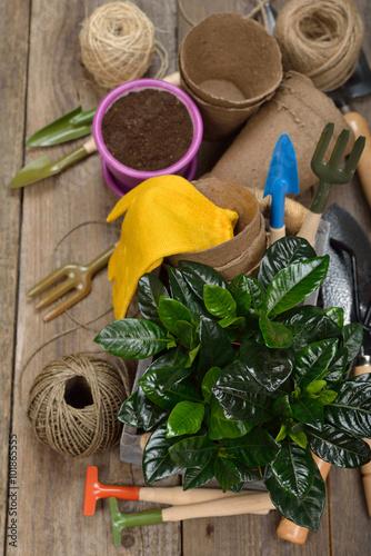 Printed kitchen splashbacks Garden Garden tools