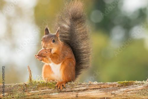 Foto op Canvas Eekhoorn all is nuts