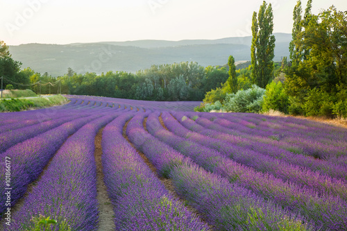 Photo  Fields of lavender Provence France