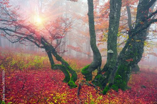jesien-w-alpejskim-lesie