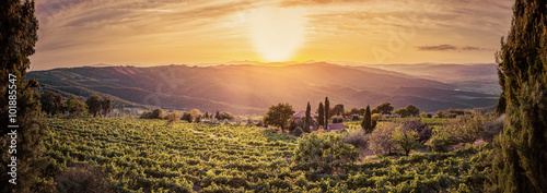 In de dag Toscane Vineyard landscape panorama in Tuscany, Italy. Wine farm at sunset