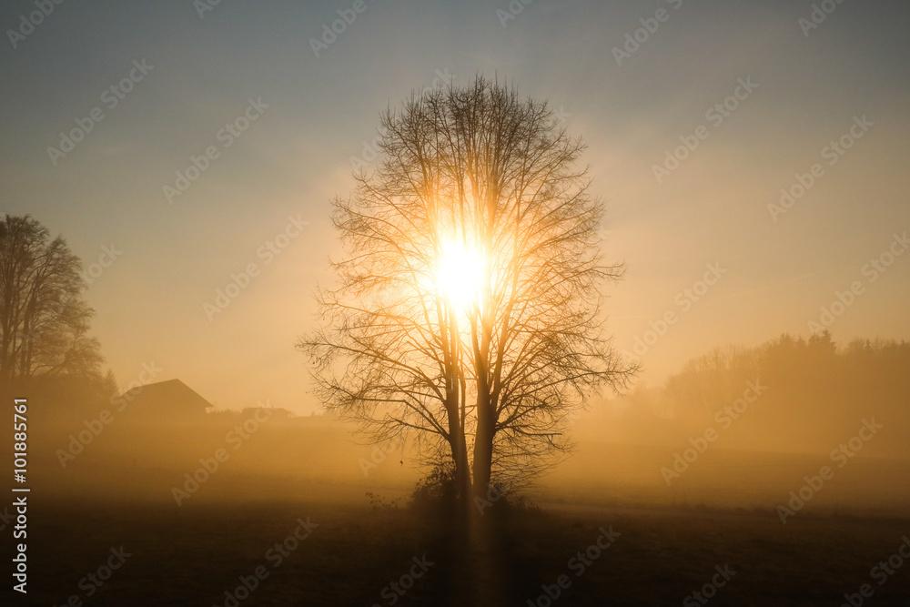 Fototapeta Der Baum der Erkenntnis