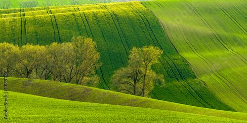Fotografiet  Agricultural landscape