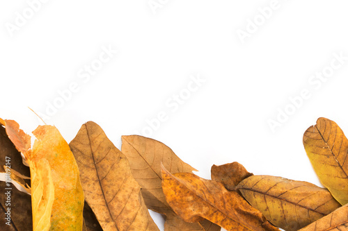 frame of dried leaves against white empty space for text.