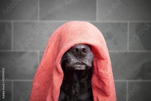 Fotografía  Perro mojado