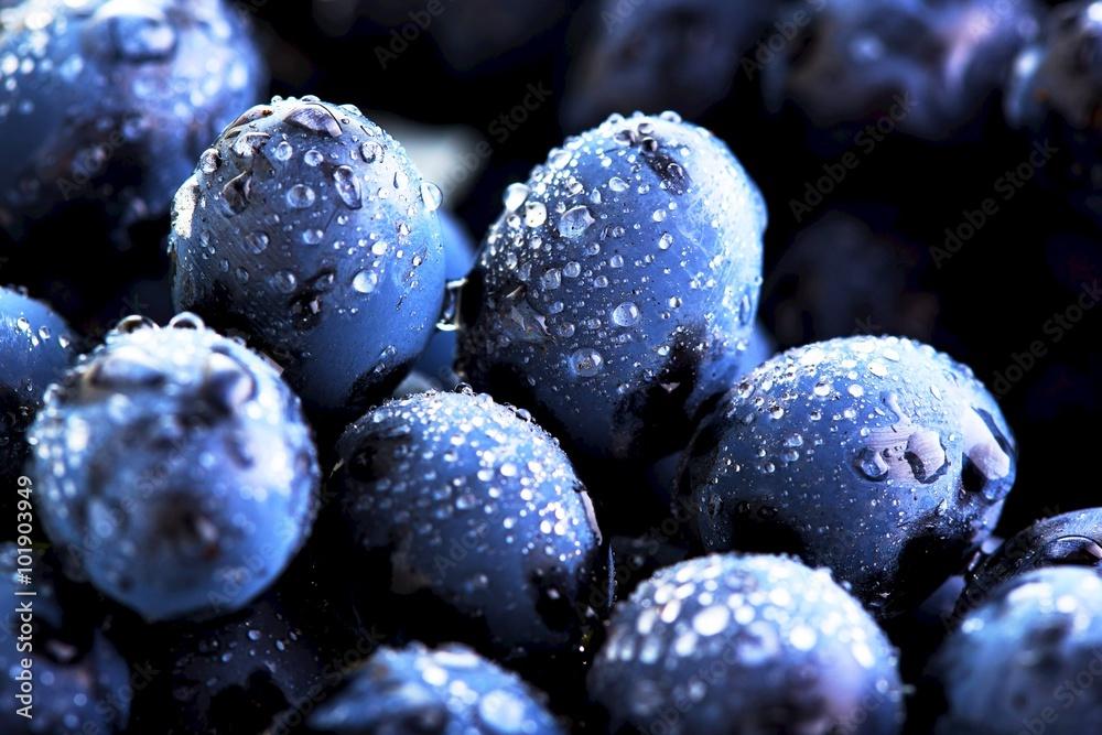 Fotografia Ripe bunch of  blue grapes closeup with shining water drops
