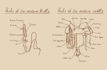 Parts Of Western Saddle And Bridle. Equestrian Cowboy Leather Harness With Stirrup And Girth. Hand Drawing Horse Riding Tack Equipment, Vector.