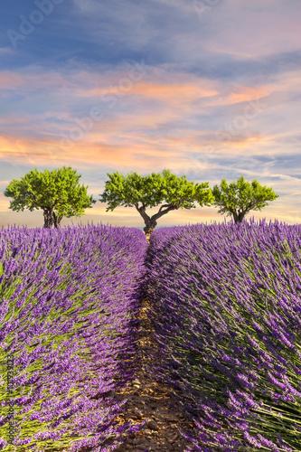 lawendowe-pole-z-trzema-drzewami-na-tle-kolorowego-nieba
