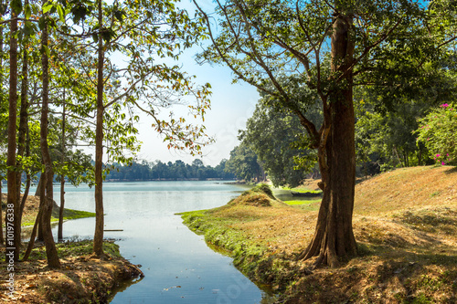 Foto op Canvas Bomen The jungle in Angkor Wat