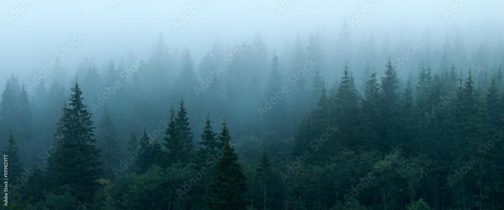 Fototapety, obrazy: Autumn forest
