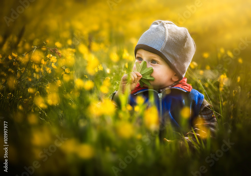 Boy sitting and playing on field of yellow flowers Tableau sur Toile