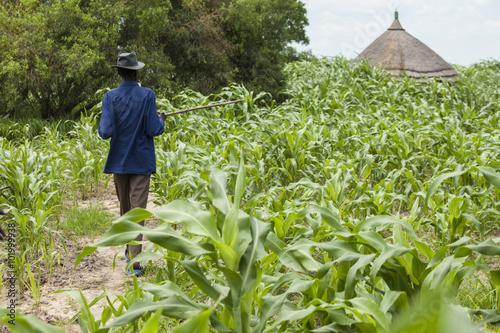 Staande foto Afrika millet farming in South Sudan