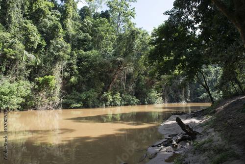 Poster Channel Río en la jungla del parque nacional Taman Negara, Malasia,
