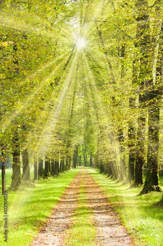 Baumallee mit Weg im Frühling und mit Sonnenschein
