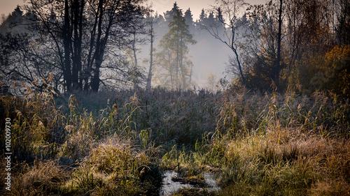 Valokuva  Leśne uroczysko