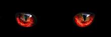 Red Monster Night Eyes Closeup