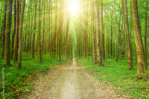 Fototapeten Wald forest trees
