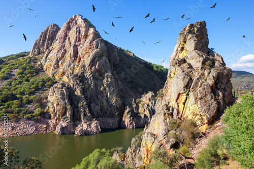 Mirador del Salto del Gitano in Monfrague National Park. Nest of a colony of black vultures over Tagus river. Province of Caceres, Spain