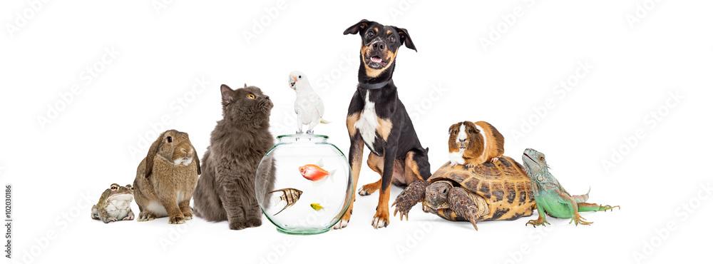 Fototapeta Large Group of Pet Animals Together