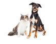 Happy Crossbreed Dog and Pretty Calico Cat