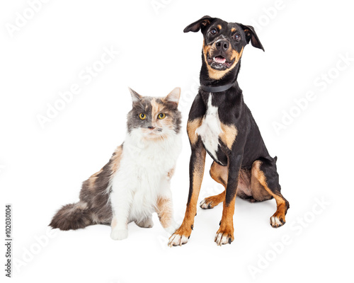 Happy Crossbreed Dog and Pretty Calico Cat © adogslifephoto