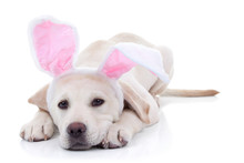 Easter Bunny Puppy Dog Animal ...