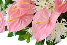 Pink Anthurium Flower (Flaming...