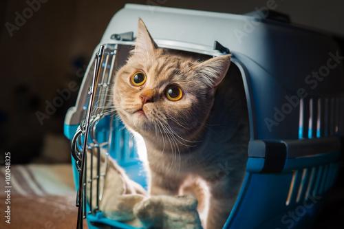 Pretty cat inside pet carrier