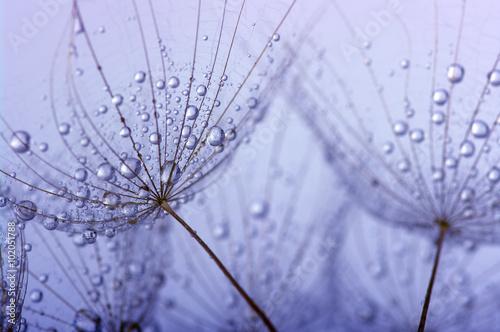 In de dag Paardebloemen en water dandelion