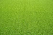 Artificial Grass, Perspective